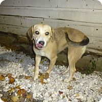 Adopt A Pet :: Corbett - Glastonbury, CT