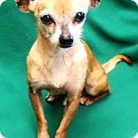 Adopt A Pet :: Leo - Watauga, TX