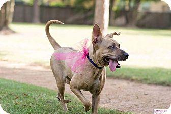 Labrador Retriever Mix Dog for adoption in Fort Atkinson, Wisconsin - Hope