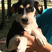 Adopt A Pet :: Genevieve - sweet as pie - Pewaukee, WI