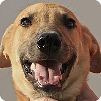 Adopt A Pet :: Jalan - Wonder Lake, IL