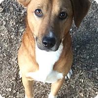 Adopt A Pet :: Jaxon - Albemarle, NC
