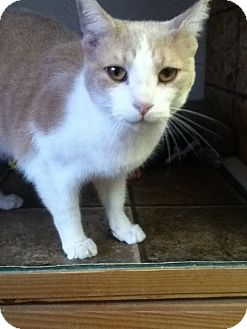 Declawed Cats For Adoption Pa