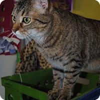 Adopt A Pet :: Titania - Bay City, MI