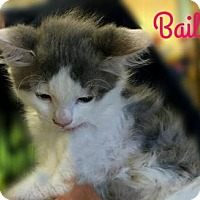 Adopt A Pet :: Bailee - Columbia, TN