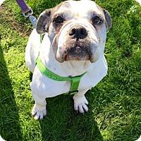 Adopt A Pet :: Emma - Santa Ana, CA
