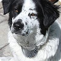 Adopt A Pet :: Darby - La Habra Heights, CA