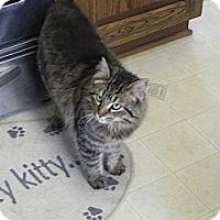 Adopt A Pet :: Piper - Fayetteville, TN