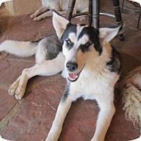 Adopt A Pet :: Jubilee - Santa Fe, NM