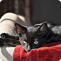 Adopt A Pet :: Cruze - Modesto, CA