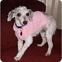 Adopt A Pet :: Frannie - Mooy, AL