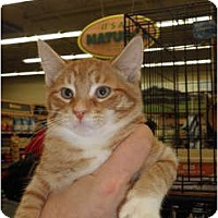 Adopt A Pet :: Ginger - Warren, MI
