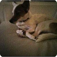 Adopt A Pet :: Summer - Toronto/Etobicoke/GTA, ON