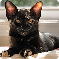 Adopt A Pet :: Hannah - Monroe, GA