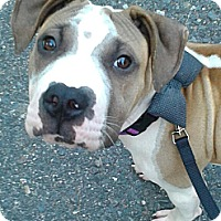 Adopt A Pet :: Billy - sterling, MA
