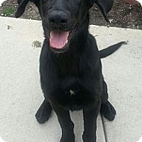 Adopt A Pet :: Chester*ADOPTED!* - Chicago, IL