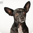 Adopt A Pet :: Petey