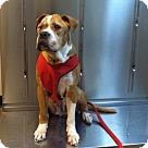 Adopt A Pet :: Mavis