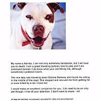 Adopt A Pet :: Rambo - Phoenix, AZ