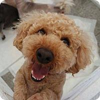 Adopt A Pet :: Toby - Buena Park, CA