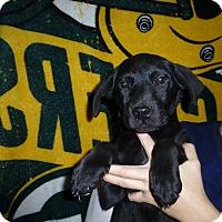 Adopt A Pet :: Sushi - Oviedo, FL