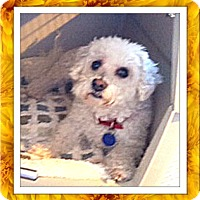 Adopt A Pet :: Adopted!!Peaches - WA - Tulsa, OK