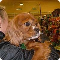 Adopt A Pet :: Tito - Westport, CT