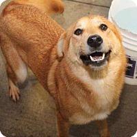 Adopt A Pet :: Pearl - Sudbury, MA