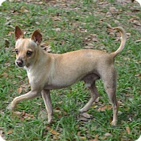 Adopt A Pet :: Donatello - Tavares, FL
