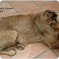 Adopt A Pet :: Stella - El Cajon, CA