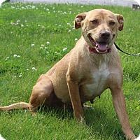 Adopt A Pet :: Elsa - Elyria, OH