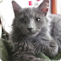 Adopt A Pet :: Emmy Lou - Philadelphia, PA