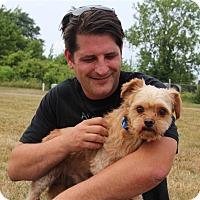 Adopt A Pet :: The Dude - Elyria, OH