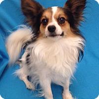 Adopt A Pet :: Paddington - Meridian, ID
