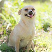 Adopt A Pet :: Dora - La Jolla, CA