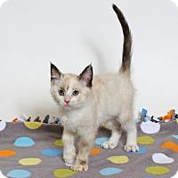 Adopt A Pet :: Faraday - Walnut Creek, CA