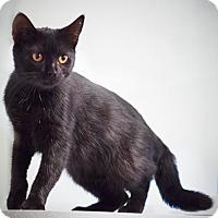 Adopt A Pet :: Cora  $20 - Lincolnton, NC