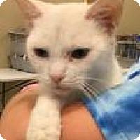 Adopt A Pet :: Glacier 5647 - Columbus, GA