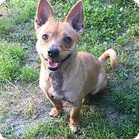 Adopt A Pet :: Cupcake - Va Beach, VA