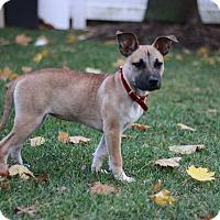 Adopt A Pet :: Lily - GREENLAWN, NY