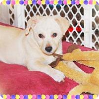 Adopt A Pet :: GOLDIE GIRL - Sweetie! - Chandler, AZ