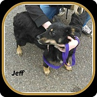 Adopt A Pet :: JEFF - Malvern, AR