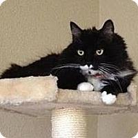 Adopt A Pet :: Maggie - Sacramento, CA