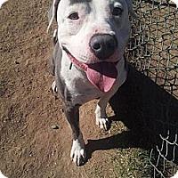 Adopt A Pet :: Mr. Spot - Scottsdale, AZ