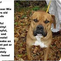 Adopt A Pet :: # 341-09 - ADOPTED! - Zanesville, OH