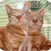 Adopt A Pet :: Peaches & Autumn - Portland, OR