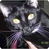 Adopt A Pet :: Ebony & Ivory - Arlington, VA