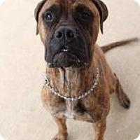 Adopt A Pet :: Isis - Justin, TX