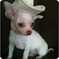 Adopt A Pet :: Pow - Moore, SC