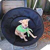 Adopt A Pet :: Hef - Orlando, FL
